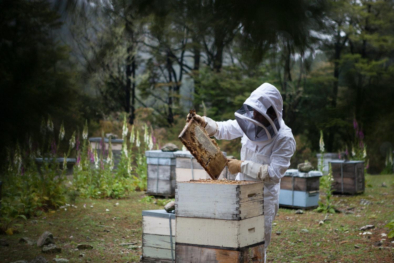 Органический мед купить