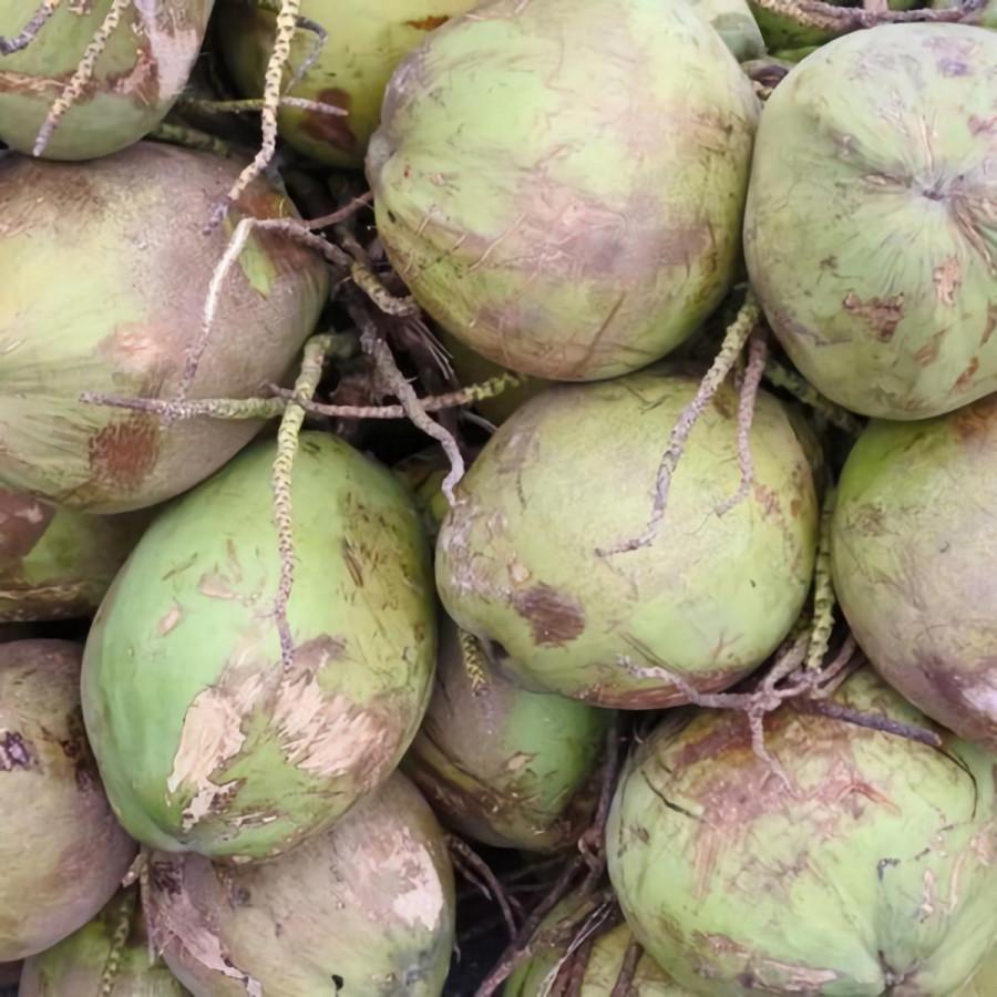 Органический кокосовый сахар Terrasoul